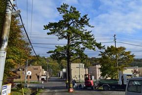 室蘭市知利別町内の「あんぽんたんの木」