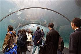 来春オープン「ホッキョクグマ館」 札幌市円山動物園