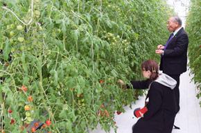 長万部町富野の植物工場で行われたトマト試食会の様子