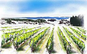サッポロビールが北斗市に自社ブドウ農園