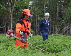 浦河高生造林に挑む 日高2森林組合の職業体験で受入