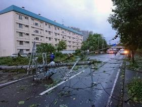 札幌各所に台風の爪痕 倒木500件近く、通行止め相次ぐ