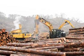 処理兼ね、木材やチップに活用 胆振東部地震で発生の倒木