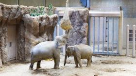 札幌市円山動物園のゾウ舎がオープン