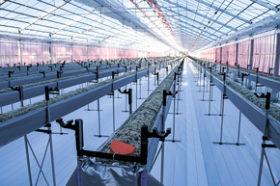 来春から阿寒町でイチゴの水耕栽培 夢の杜ファーム